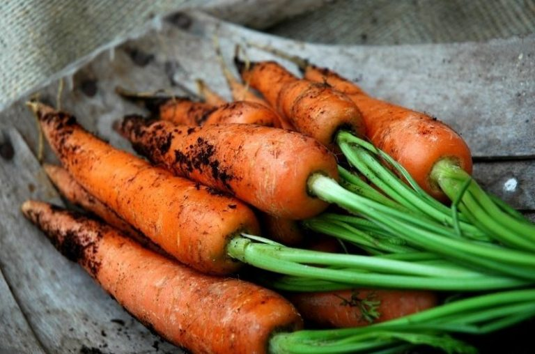 A pile of home grown Carrots